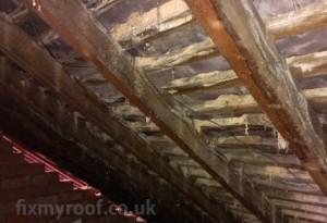damp in roof loft