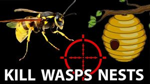 How to kill a wasps nest